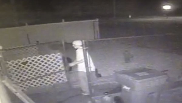 Security footage shows a white man breaking into K-9 Kleaners early Sunday morning. According to the business's owner, he stole a handicapped white Maltese dog named Bella.