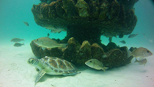 Pyramid reefs of different sizes will be used in the artificial reef enhancement program funded by the National Fish and Wildlife Foundation. Nearshore reefs will use different configurations to benefit the saltwater ecosystem along the Alabama Gulf Coast. | Submitted photo