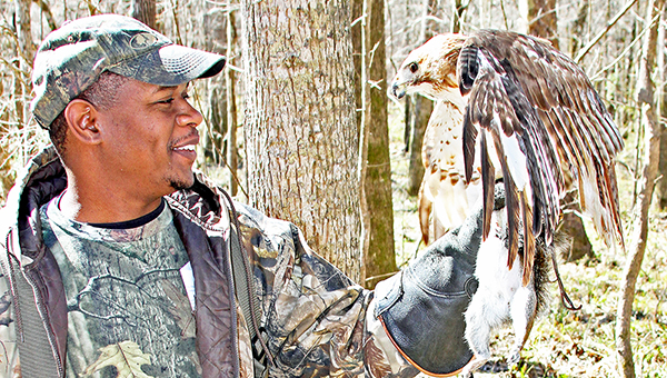 Symeon Robins and his red-tail, Gizmo, had similar success when the squirrel tried to change trees. Mike Germana shows off his American kestrel, the smallest falcon in North America, commonly known as a sparrow hawk. Symeon Robins (right) and his red-tail, Gizmo, had similar success when the squirrel tried to change trees. | David Rainer/submitted photo